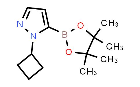 2227297-73-4 | 1-Cyclobutyl-5-(4,4,5,5-tetramethyl-1,3,2-dioxaborolan-2-yl)-1H-pyrazole